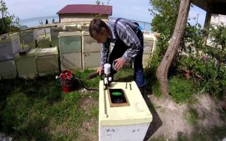 Обработка пчел от клеща осенью муравьиной кислотой: показания и применение