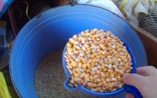 Вредна ли пшеница для кроликов?