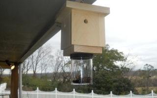 Как уничтожить пчел соседа?