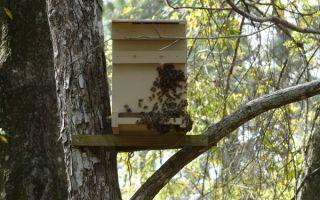 Как изготовить ловушку для пчел?