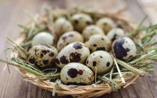Способы того, как проверить свежесть яиц