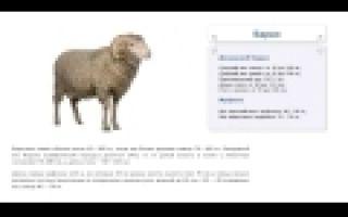 Как рассчитать вес живого барана?