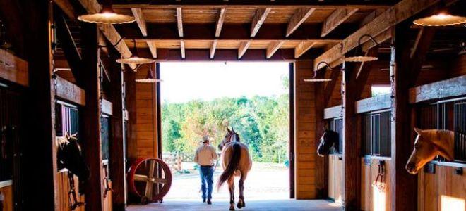 Какие особенности английской чистокровной лошади?