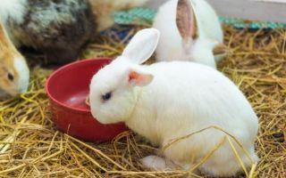 Когда можно отсаживать крольчат от крольчихи в каком возрасте и чем их кормить