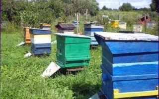 Пчелы в августе: работы на пасеке, как правильно ухаживать летом, лечение