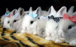 Советы о том, чем кормить декоративных кроликов