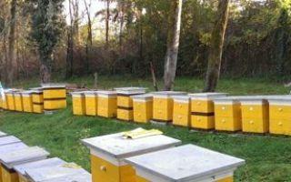 Как ускорить размножение пчел?