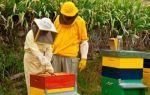 С чего начать уход за пчелами?