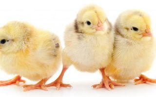 Инструкция по применению Тривита для животных