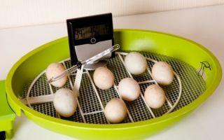 Инкубация куриных яиц: режимы инкубации, температура для выведения цыплят