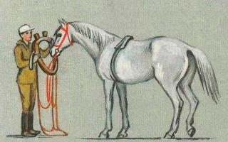 Из чего состоит сбруя для лошадей?