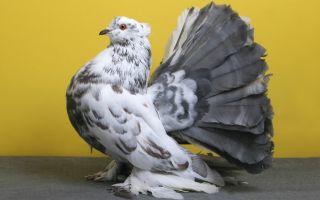 Методы того, как поймать голубя