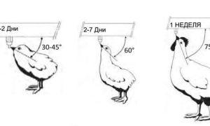 Как сделать поилку для куриц?