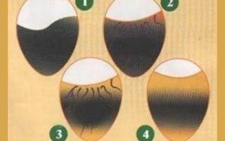Когда делают овоскопирование куриных яиц?