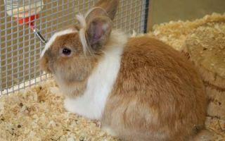 Как вылечить кокцидиоз у кроликов?