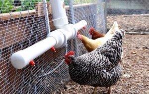 Энрофлоксацин инструкция по применению в ветеринарии: для птиц, кроликов, собак, кошек