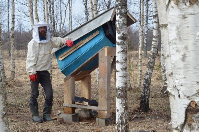Колодное пчеловодство для начинающих: чертежи, содержание пчел