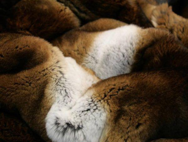 Мех рекса: что это такое, меховые породы кроликов, ценность и шубы из них