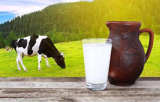 Почему молоко у коровы горчит зимой и осенью или когда постоит, как убрать горечь
