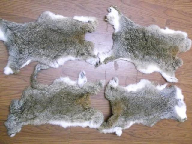 Как выделать шкурку кролика в домашних условиях: инструменты и материалы, процесс обработки
