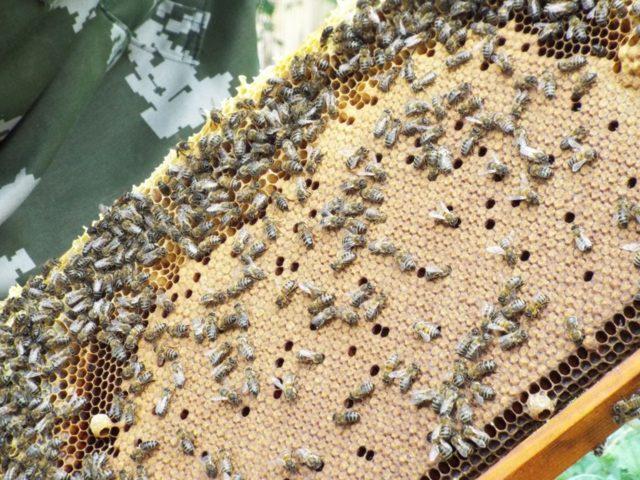 Лозеваль инструкция по применению для пчел и птиц: как использовать, в каких случаях