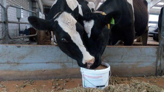 Мазь или порошок Биомицин инструкция по применению в ветеринарии