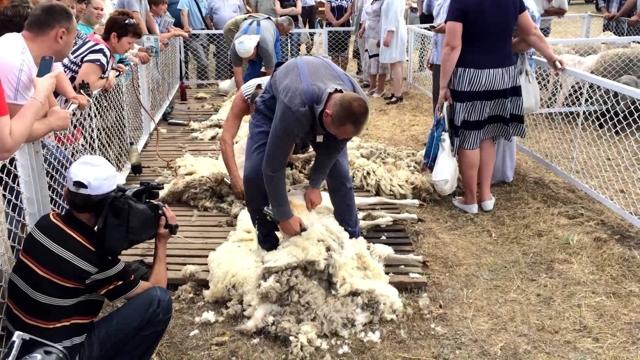 Сколько раз в год стригут овец, когда лучше проводить стрижку баранов