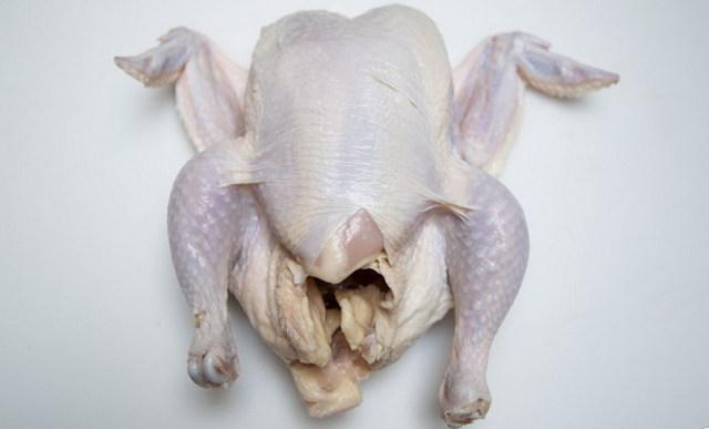 Пушкинская порода кур: фото, описание, преимущества и уход