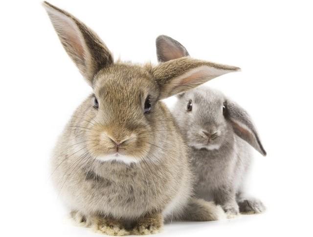 Вздутие живота у кроликов причина и лечение, что делать чтобы не умирали