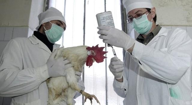 Антибиотики для кур несушек и цыплят широкого спектра: офлосан, байтрил, дитрим, энрофлон