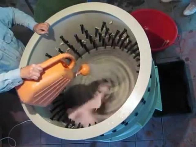 Самодельная перосъемная машина своими руками для ощипывания кур, гусей и уток
