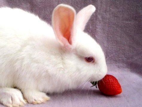 Как ухаживать за декоративным кроликом в домашних условиях и чем кормить