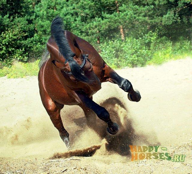 Самая дорогая лошадь в мире: особенности чистокровных видов и требования к скакунам