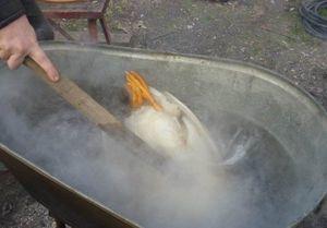 Как ощипать гуся быстро в домашних условиях легко, правильно: вручную и автоматически