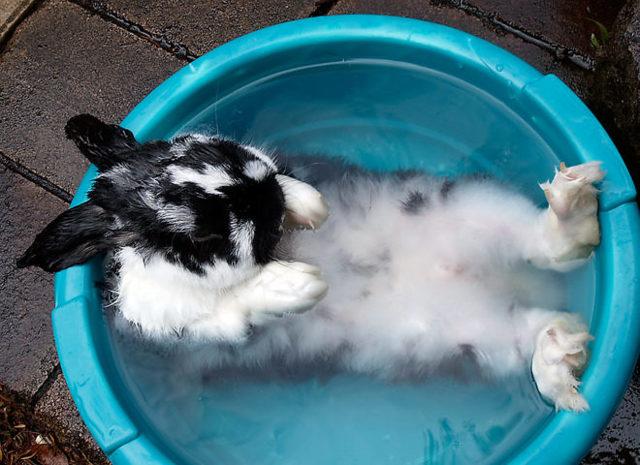 Как купать кролика советы методы