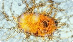 Сальмонеллез у кур: признаки, симптомы и лечение у птиц в домашних условиях