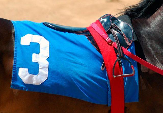 Седло для лошади, изготовление и строение: спортивных, конкурных, казачьих, дамских и других видов