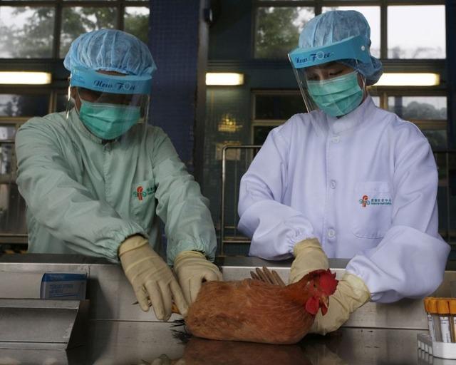 Дельцид инструкция по применению у кур, обработка и избавление от пероеда