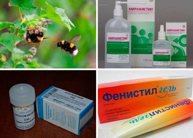 Шмель кусается или нет: что делать, если ужалил, лекарства и народные средства