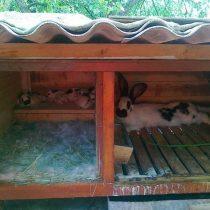 Крольчатники своими руками чертежи и размеры, как сделать кролятник простая схема