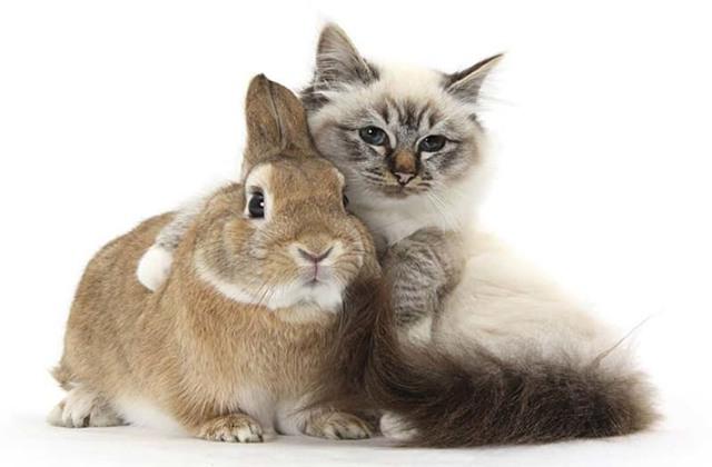 Ушной клещ у кроликов симптомы и лечение в домашних условиях проверенными средствами