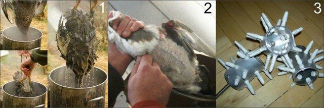 Как зарубить, ощипать и потрошить куриц 4 приема +видео инструкция