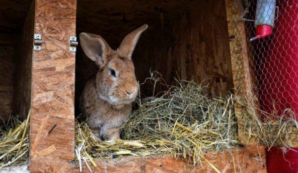 Какую можно давать кроликам траву, а какую давать нельзя: особенности кормления, фото