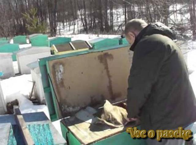Лечение пчел осенью и летом: когда и чем обрабатывать, лекарство от клеща