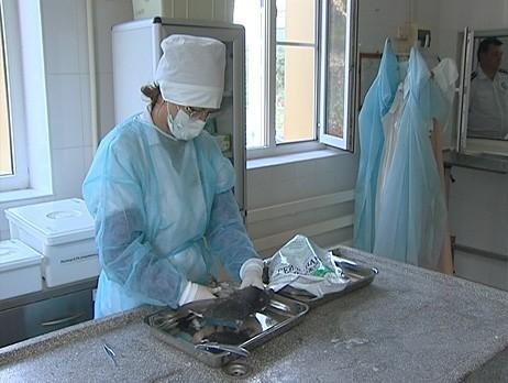 Вертячка у голубей: лечение, признаки, опасна ли болезнь Ньюкасла