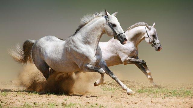 Какая максимальная скорость лошади?