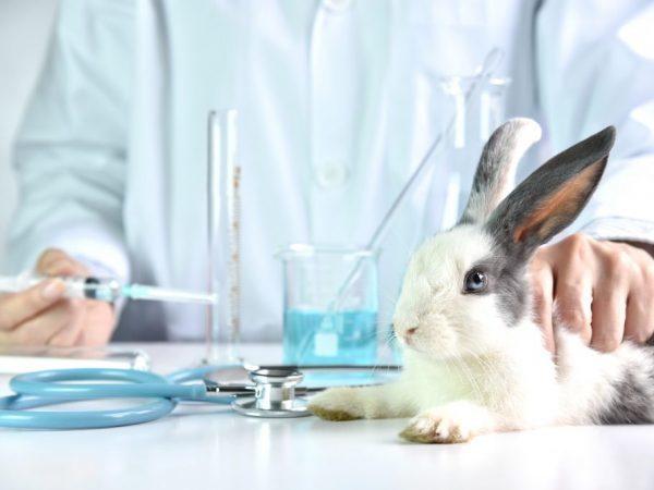 Дитрим инструкция по применению для птиц, кроликов и других животных