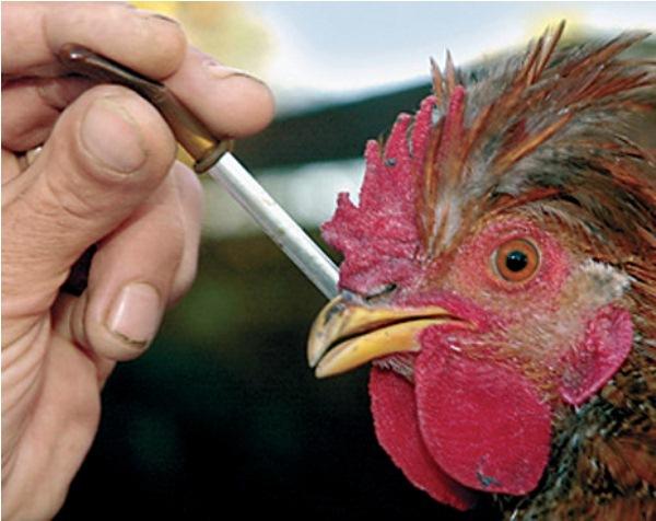 Соликокс инструкция по применению для цыплят, взрослых птиц и кроликов