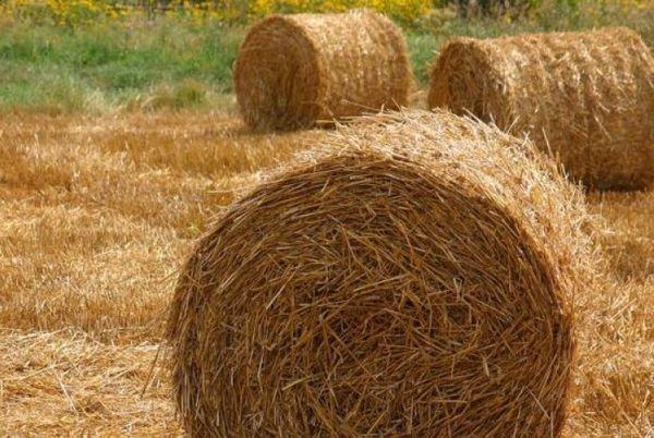 Сколько сена надо корове на зиму в день, как часто кормить