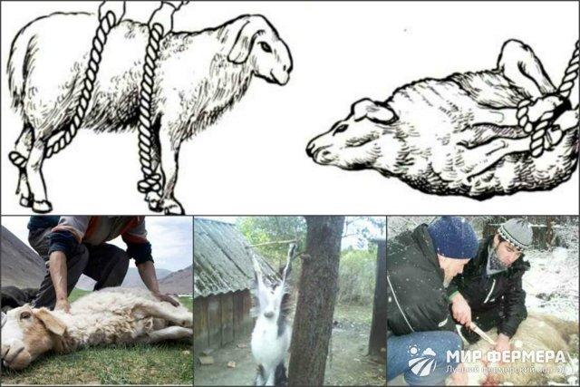 Как разделать барана правильно: пошаговая инструкция, способы разделки